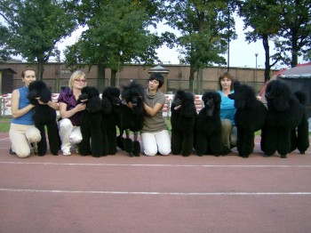 dogs from the left:BAGGIO,BASSIANA,AZAZELLO,BROCCA,ALLEGRETTA,SAMANTA,ABADONNA,BIRINO